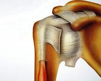 Articulation-GLENO-HUMERALE