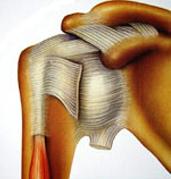 Rappel-anatomique
