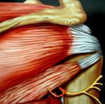 nerf-circonflexe
